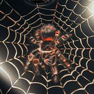 Gallery_thumbnail_spider3
